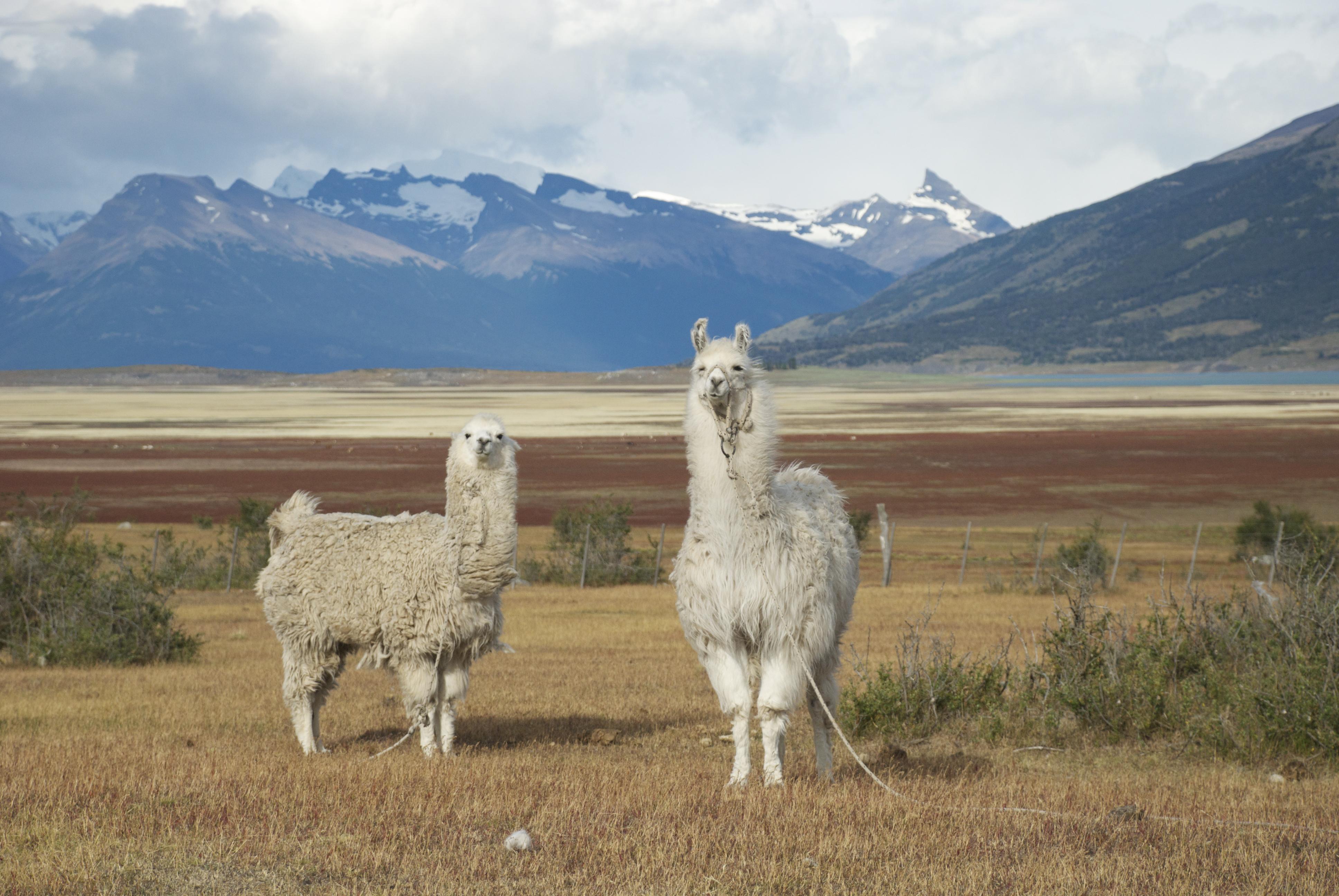 Viaggiare da soli in Argentina
