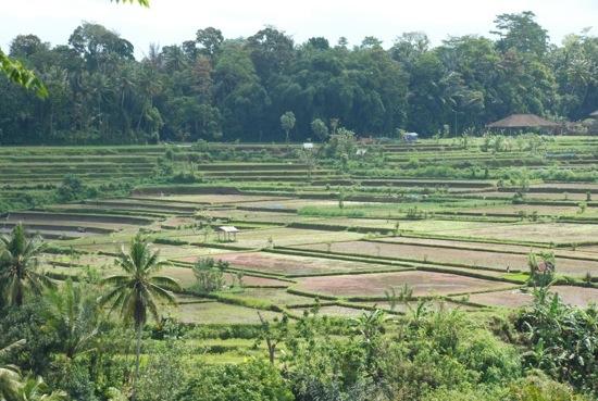 viaggiare da soli a Bali