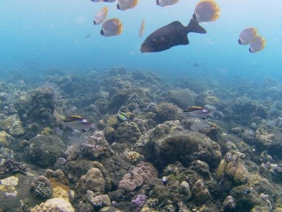 Immersioni a Bali nel relitto di Tulamben