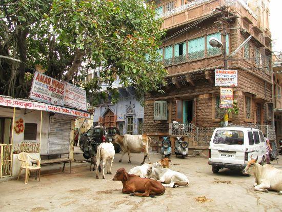 donna in viaggio da sola in India