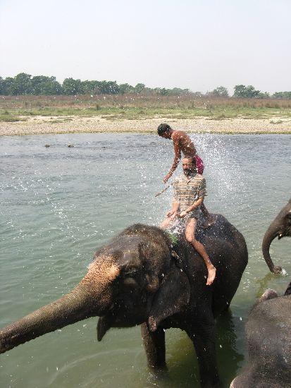 Elephant bath Chitwan Nepal
