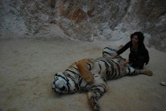 Thailand nov 2011