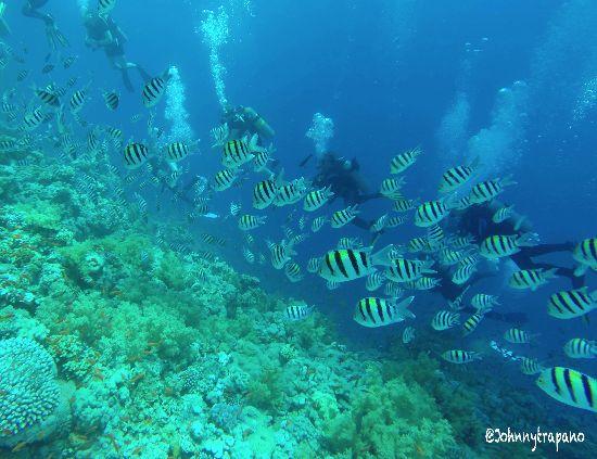 Brevetto Advanced Open Water nel Mar Rosso – Egitto