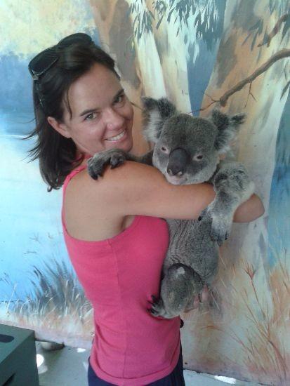 Koala_Working Holiday Visa in Australia