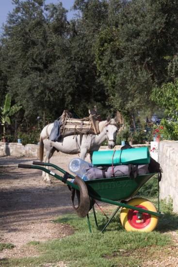 Carriola e cavallo durante una pausa