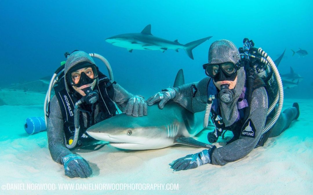 Cristina zenato una vita dedicata agli squali bahamas for Pesci da laghetto mangia zanzare