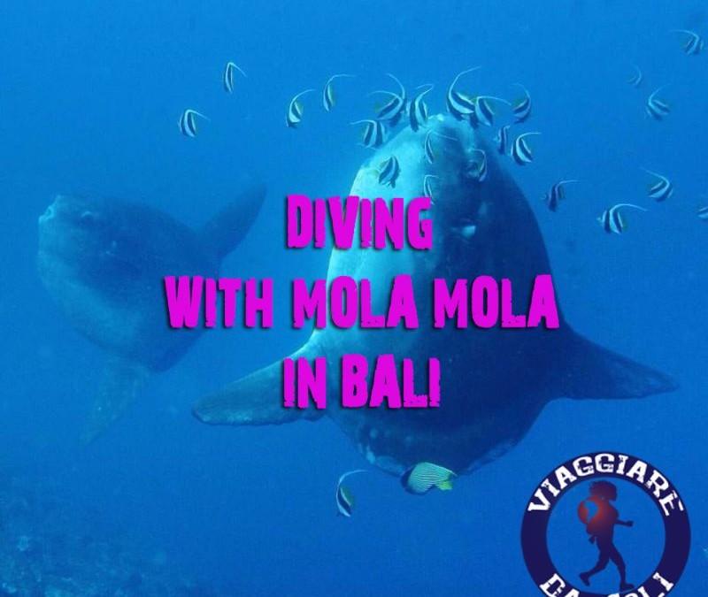 Fare immersioni con i Mola Mola a Bali