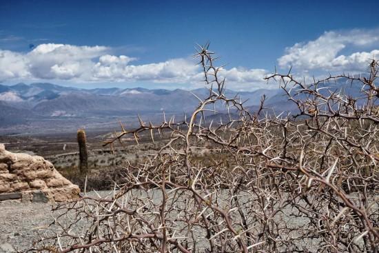 Parque Nacional de los Cardones - Cachi