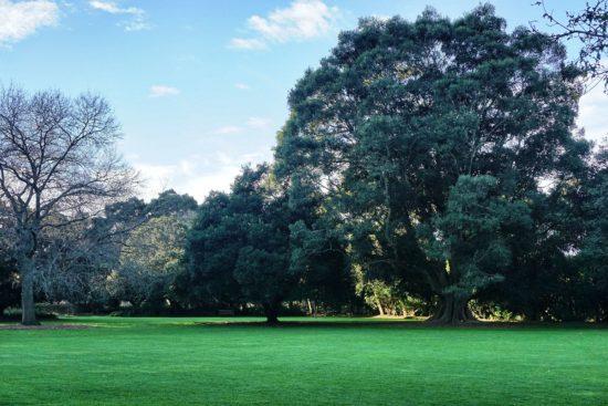 Parco Botanico Sydeny