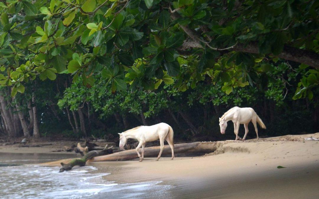 Consigli per viaggiare da soli in Costa Rica
