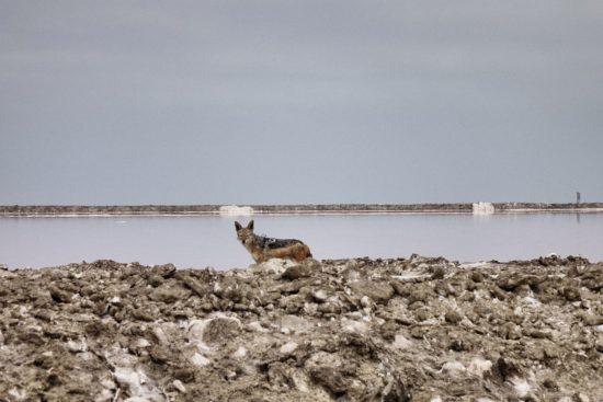 Saline di Walvis Bay