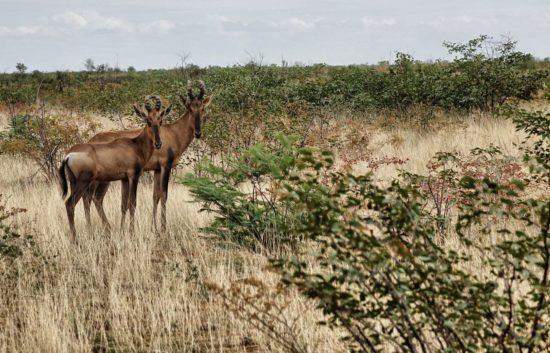 Safari all Etosha - Namibia