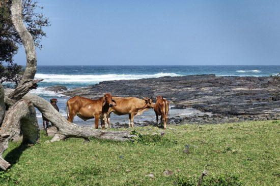 wild coast Southafrica