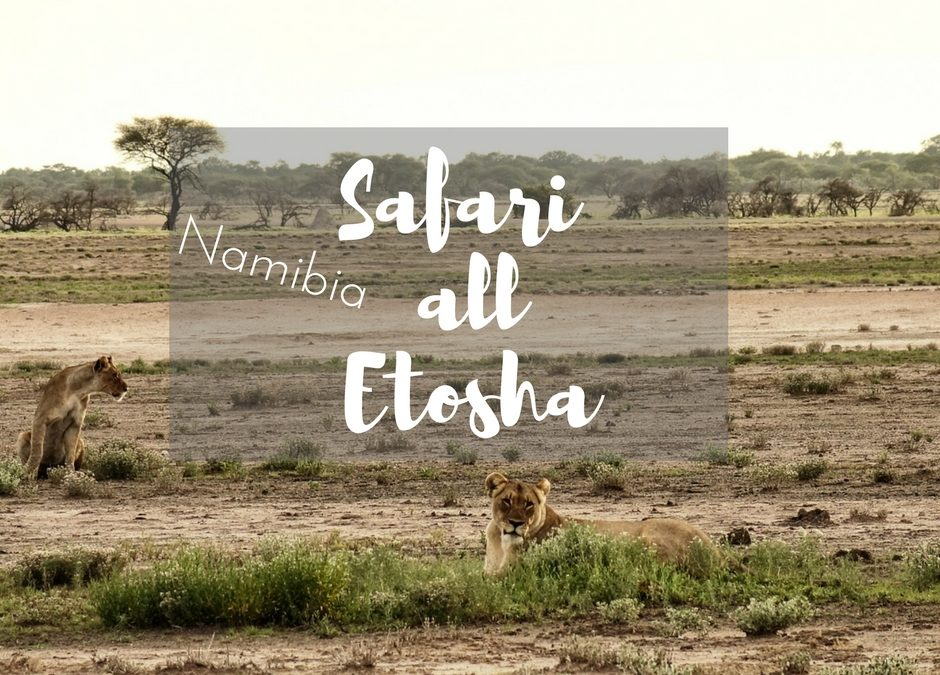 Come Organizzare un Safari al Etosha National Park in Namibia