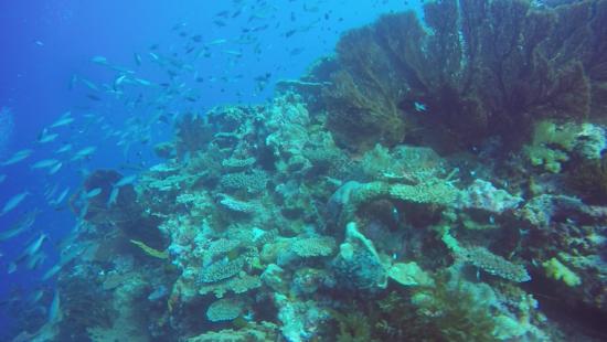 Fare immersioni all Isola dei Pini
