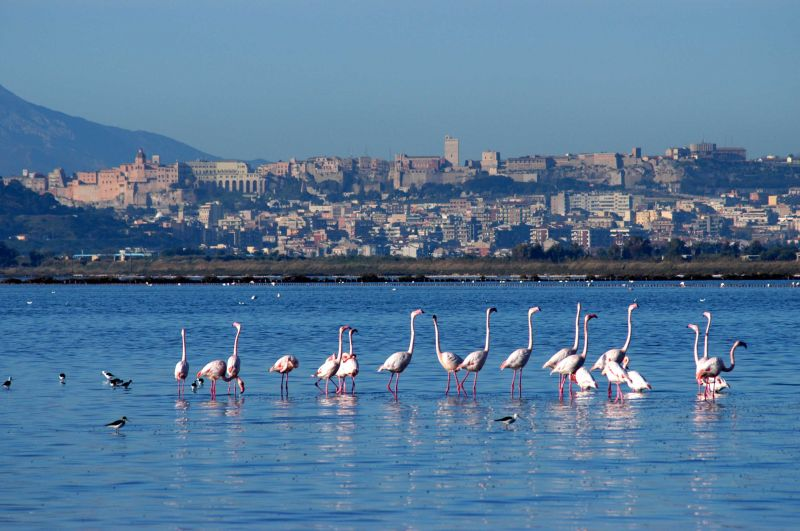 5 Cose da non perdere a Cagliari