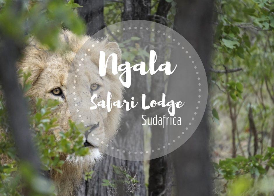 Safari nella Riserva Privata di Ngala-  Kruger – Sudafrica