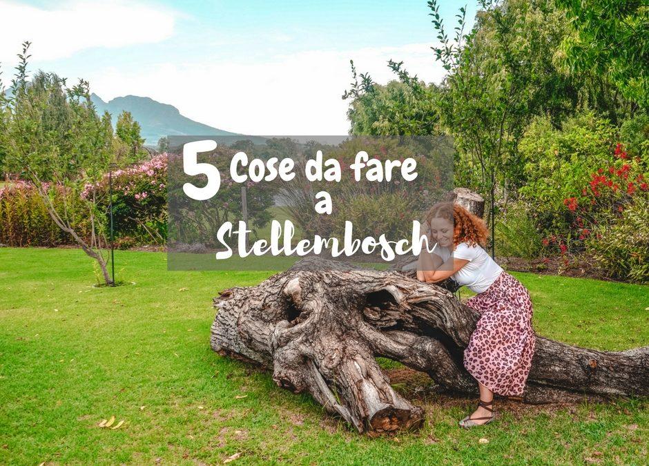 Cinque cose da fare a Stellembosch assolutamente- Sudafrica