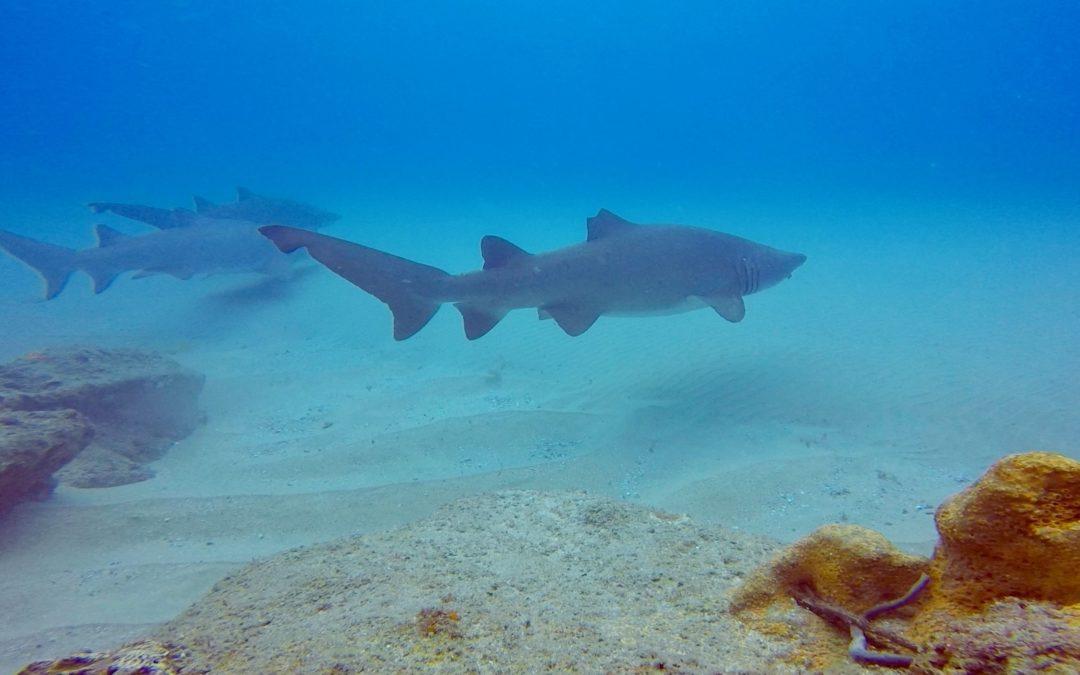 Fare immersioni con gli squali in Sudafrica- Sodwana Bay