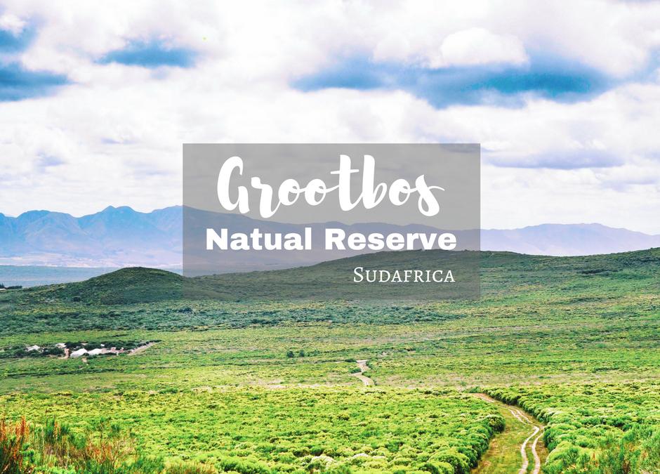 Riserva Naturale di Grootbos: più di 800 piante endemiche- Sudafrica