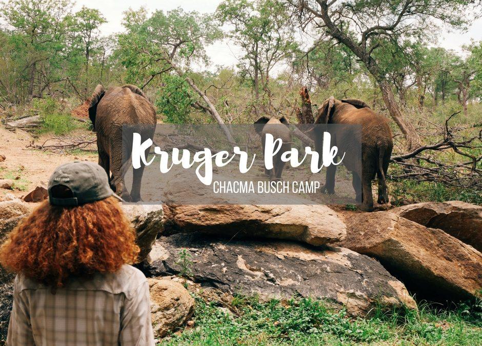Kruger Park in Sudafrica: Safari al Chacma Bush Camp