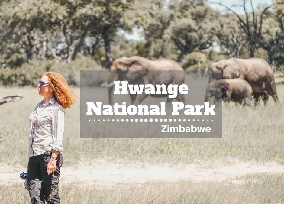 Zimbabwe: Hwange National Park perché visitarlo