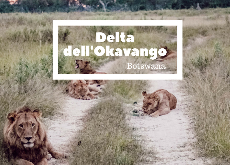 Come organizzare un viaggio in Botswana: Delta dell'Okavango
