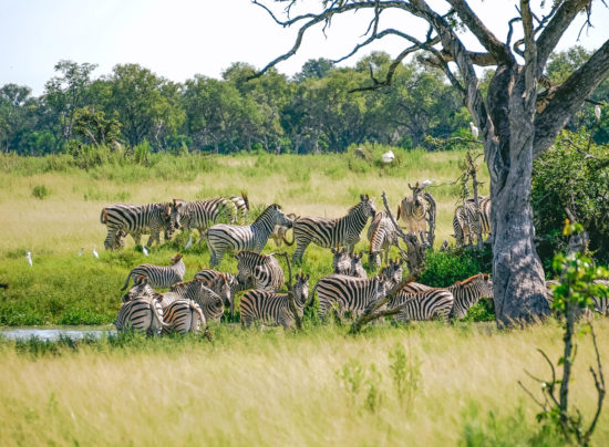 Delta dell'Okavango -Botswana
