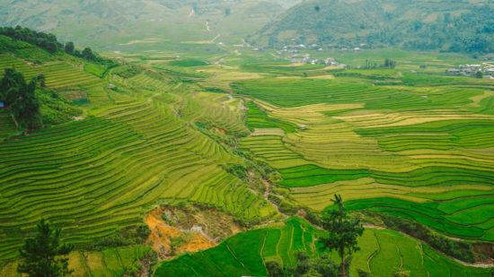 Mu Cang Chai - VIETNAM