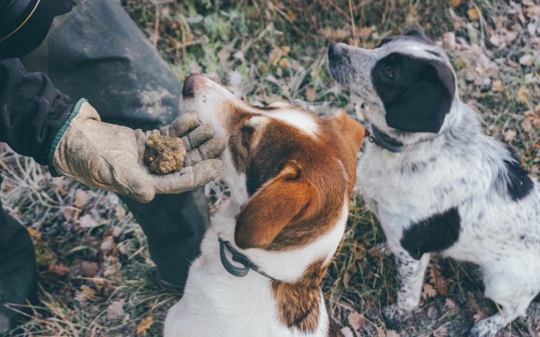 Trekking sui Sibillini: andare a caccia di tartufi con i cani