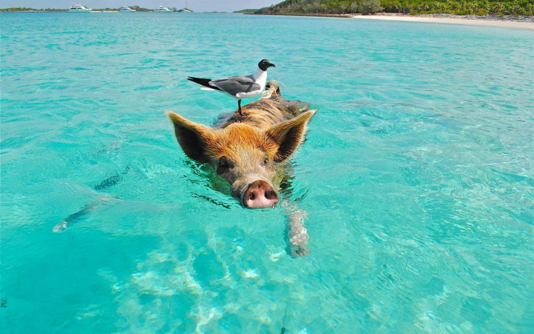 Mini Guida delle Bahamas: alla Ricerca del Paradiso