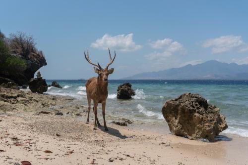Visitare l'isola di Menjangan al nord di Bali e il Parco Nazionale Bali Barat