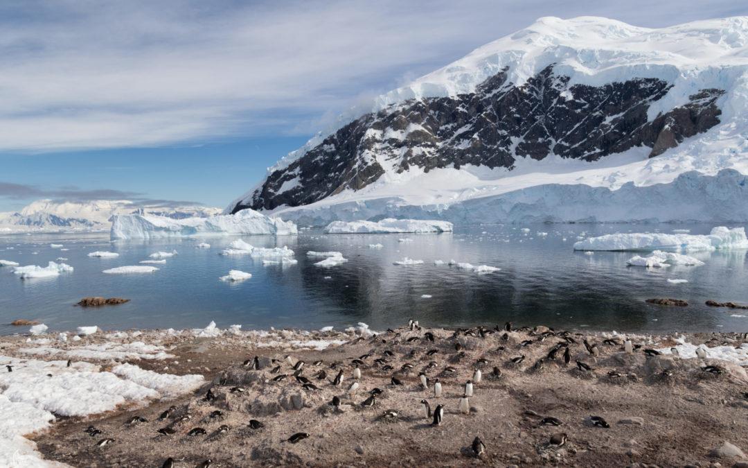 Elisa: viaggio estremo crociera in Antartide in solitaria