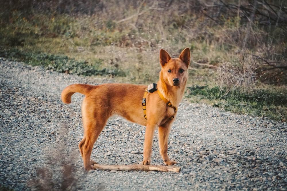 Viaggiare con il cane: come trovare il dogsitter quando sei in viaggio