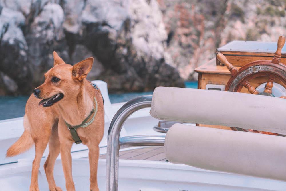Come viaggiare con il cane in estate: tutto quello che devi sapere prima di partire