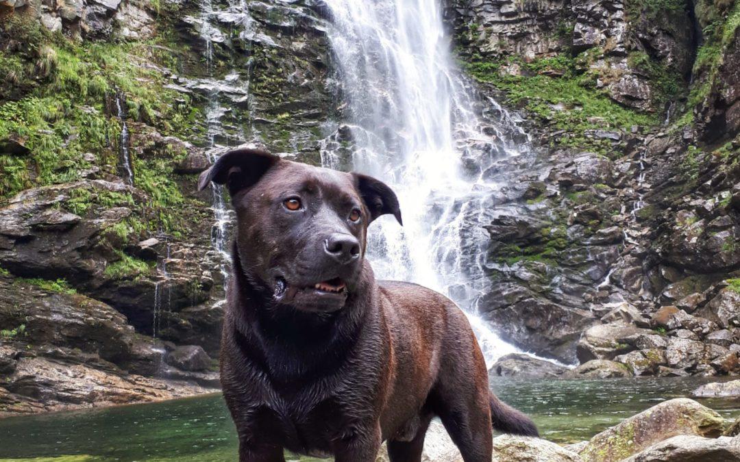 Roberto: la sua avventura dalla Colombia alla Svizzera per salvare il cane