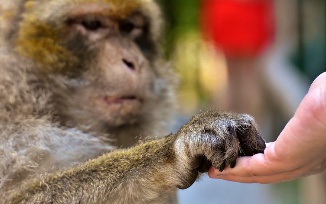 Perché non si deve dare da mangiare agli animali selvatici